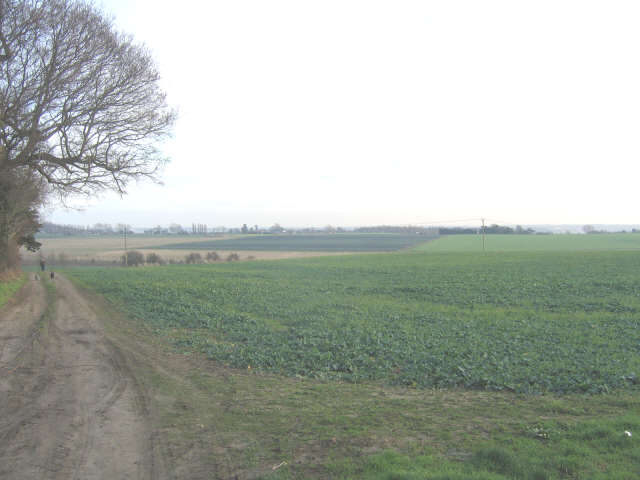 Arable land east of Crutches Lane