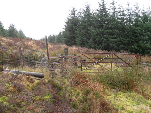 Stile into the forest