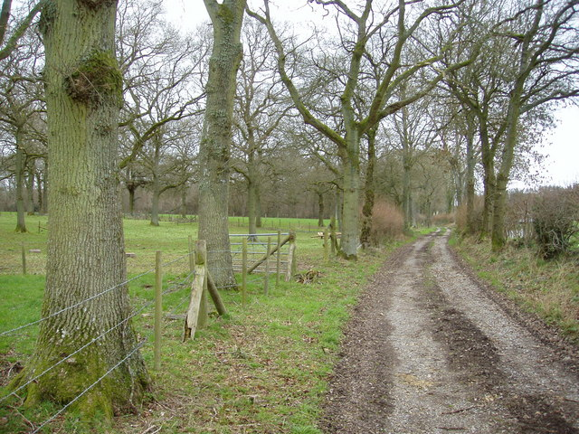 Byway near Lye Copses