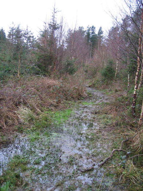 A Boggy Path in Pentraeth Forest