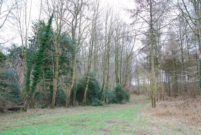 Track into Launceston Wood