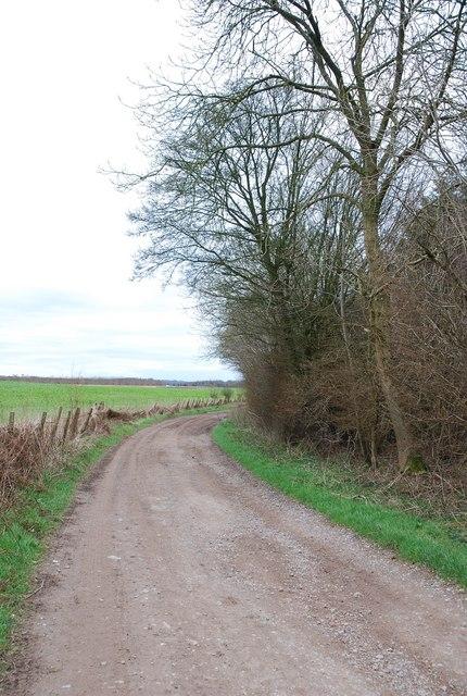 Track around Launceston Wood
