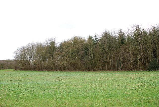 Launceston Wood