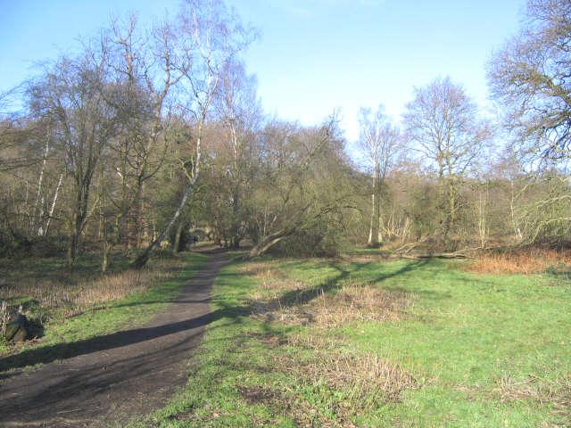 Ashenbank Wood, Cobham