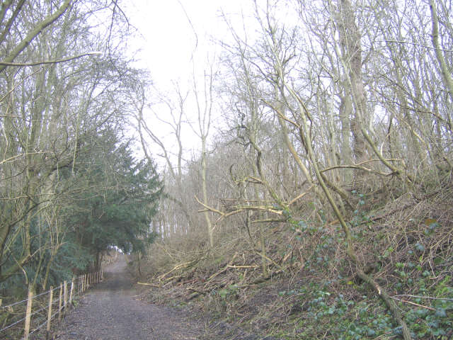 Byway through Ashenbank Wood