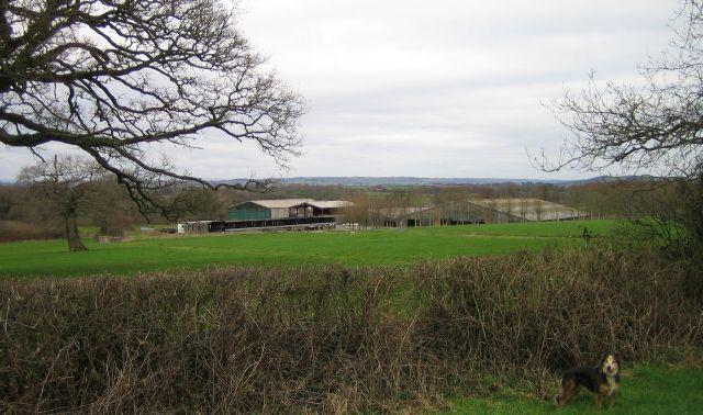 Townsend Dairy Farm