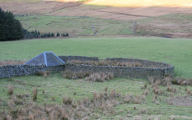 Sheep fank, Altrieve