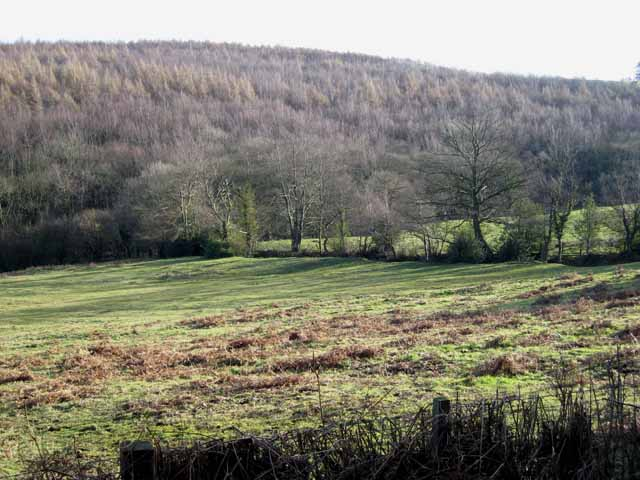 West Wood near Waterhouses