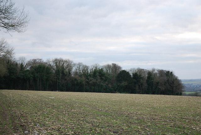 Bingledon Wood