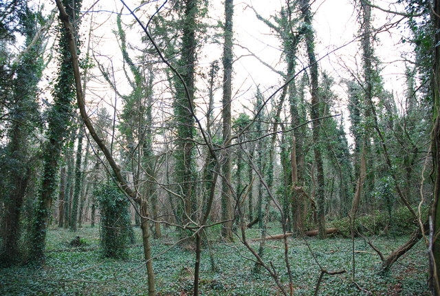 Inside Bingledon Wood