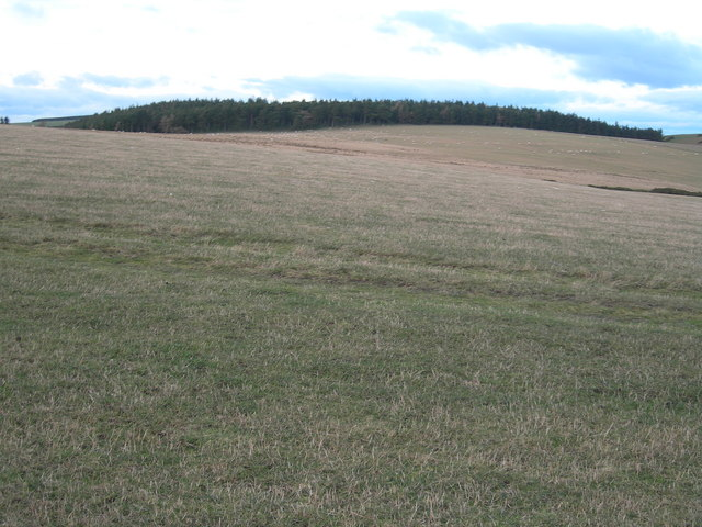 Grazing land, trees in distance