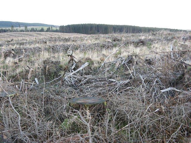 Felled area, Bellendean Shank