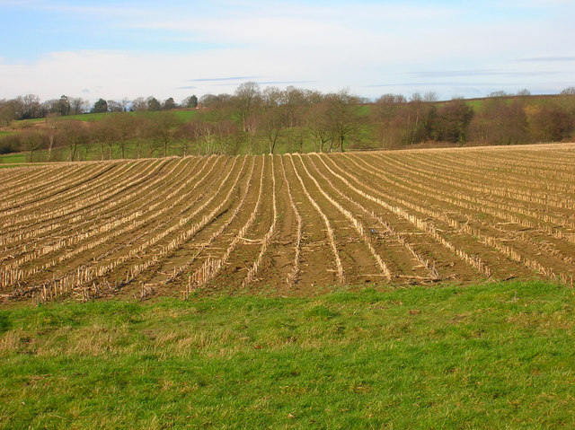 Field of Stalks near Halland Park Farm