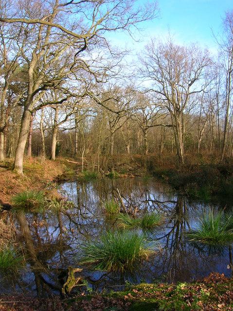 Moat, Moat Wood