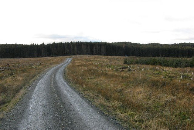 Forest road near the Goose Loch