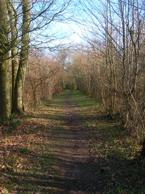 Footpath, Moat Wood