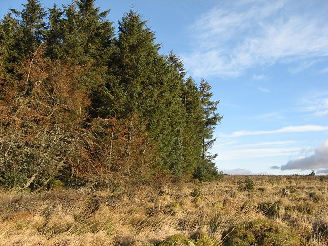 Forest edge, Kingside Loch