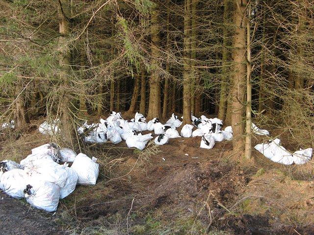 Tree bags full