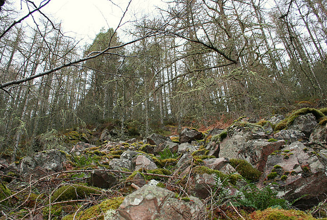 The moss clad larches on Romach's steep north shore.