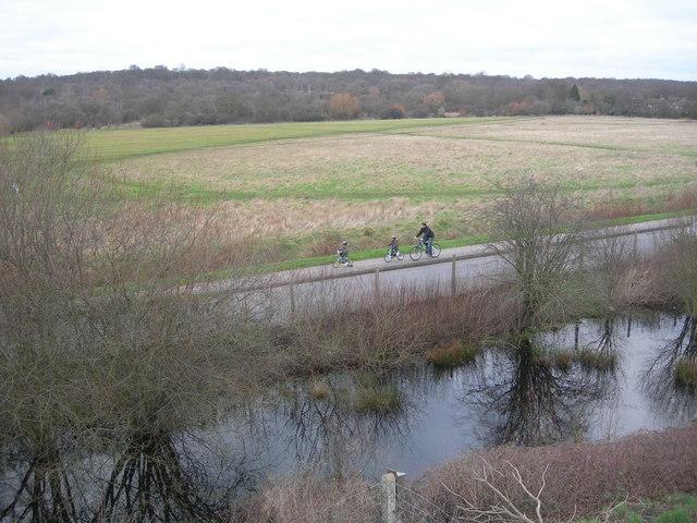 Wood Field, Ashtead Common