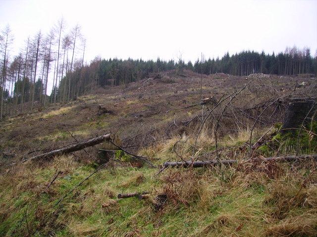 Felled Plantation