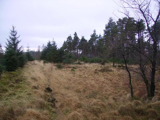 Footpath, Grizedale Moor