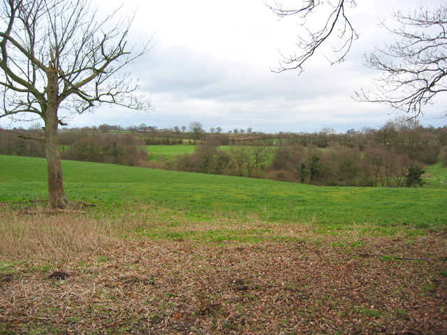 Tree-studded pasture south of The Lees