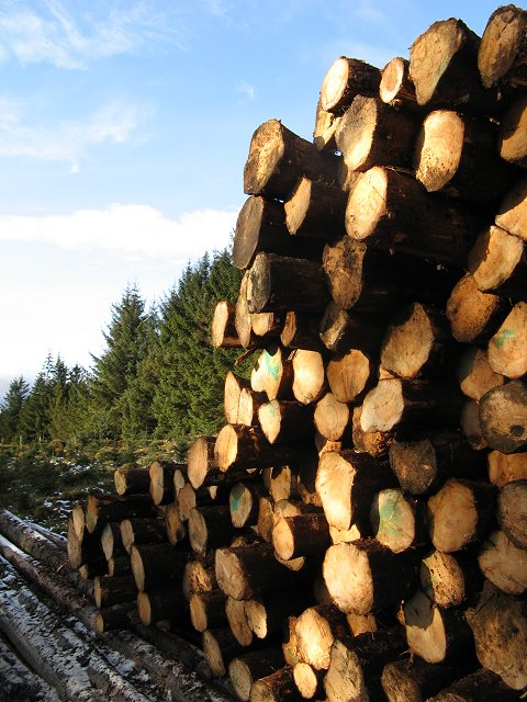 Log stack, Craik Forest