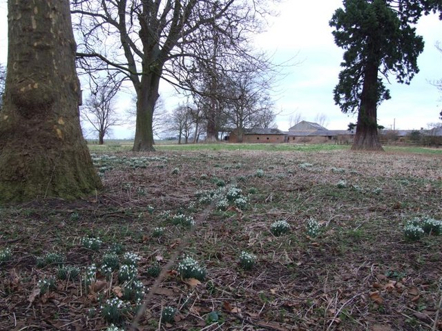 Snowdrops at Stags Holt