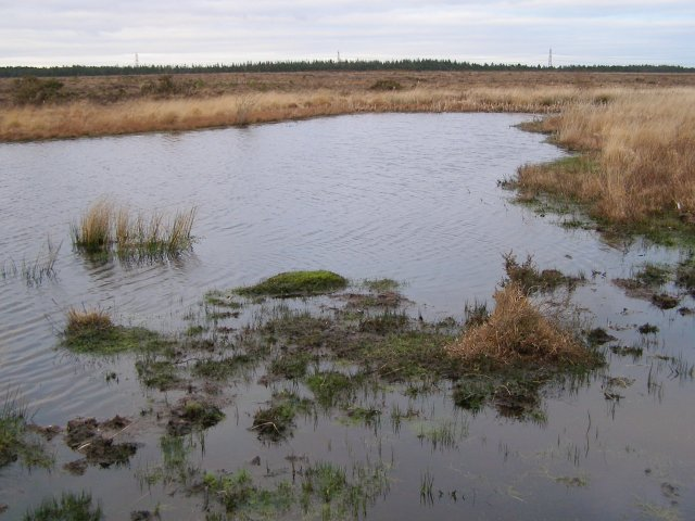 Stonyford Pond, Beaulieu Hilltop Heath, New Forest
