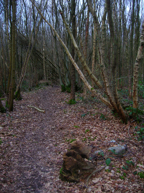 Bentley Wood