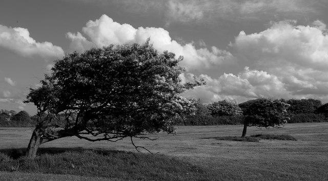 Windy Trees