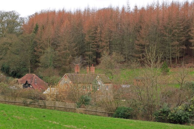 Houses below fir trees at Higher Coombe