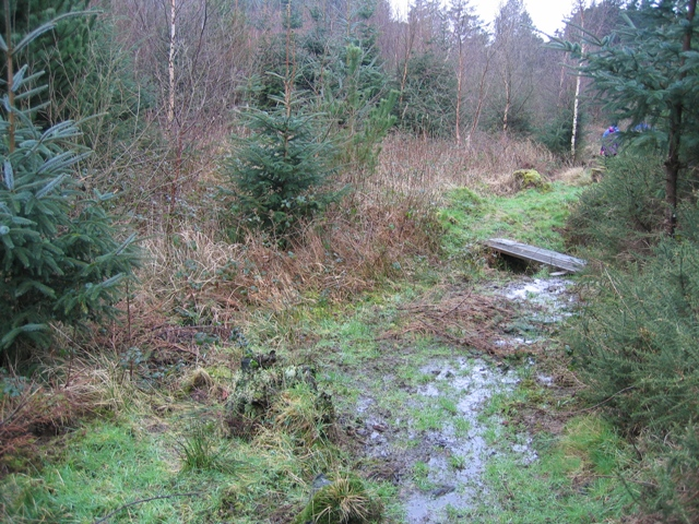 Footpath in  Pentraeth Forest