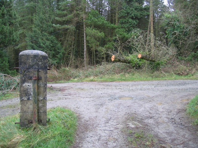 Track Junction in Pentraeth Forest