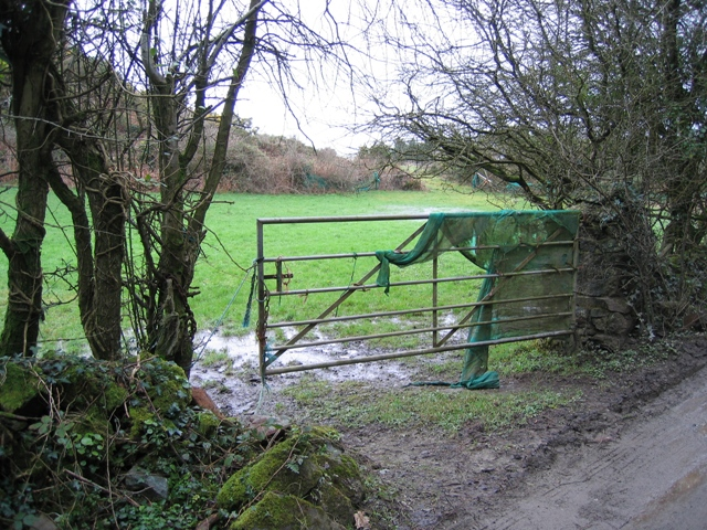 Field and Gate at Hafod-Leci
