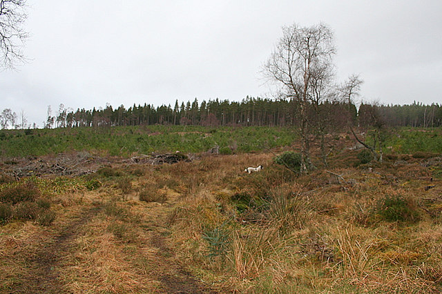 Forestry track west of Loch Romach.