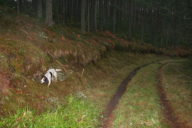 The darkness of the forest track to Loch Romach.