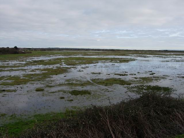 Pennington Marshes