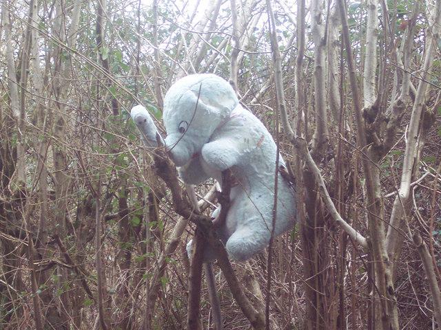Looks Like Dumbo Crashed Landed