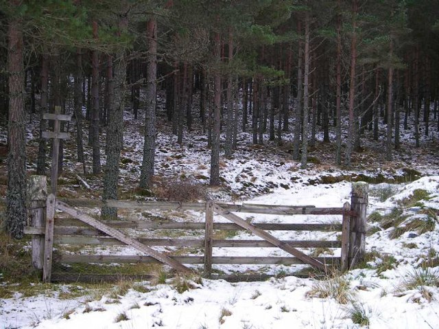 Gate on forest track into pine plantation