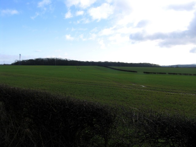 Piper Wood and fields