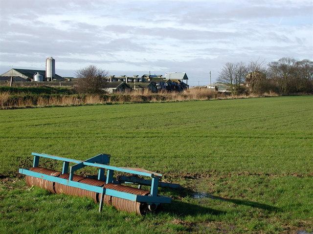 East Growths, Patrington Haven