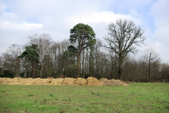 Oak, Pines and Pile