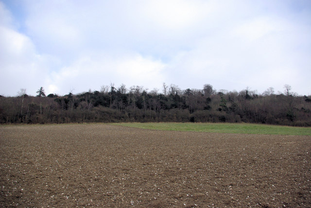 Woods from a Ploughed Field