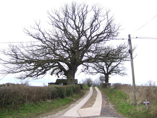 Fine oak in profile