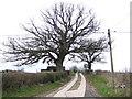 SO4610 : Fine oak in profile by Jonathan Billinger