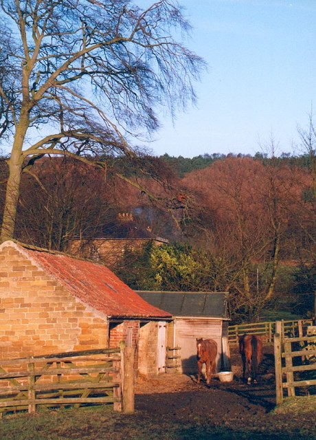Horses at Kirby Knowle