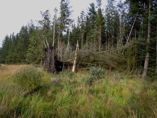 Windblow in Clatteringshaws Forest