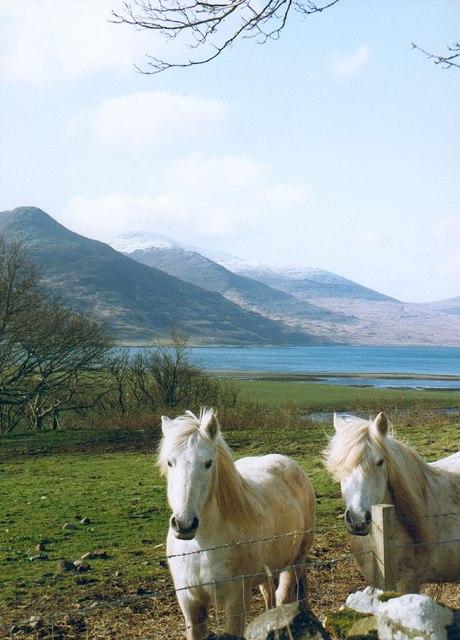 Horses at Killichronan